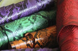 Our Snake Skin Collection