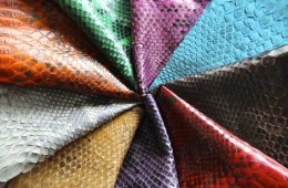 Beautiful Snake Skin Colors Selection