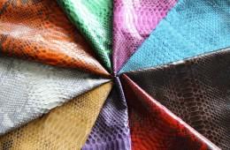 Beautiful Snake Skin Colors Varieties